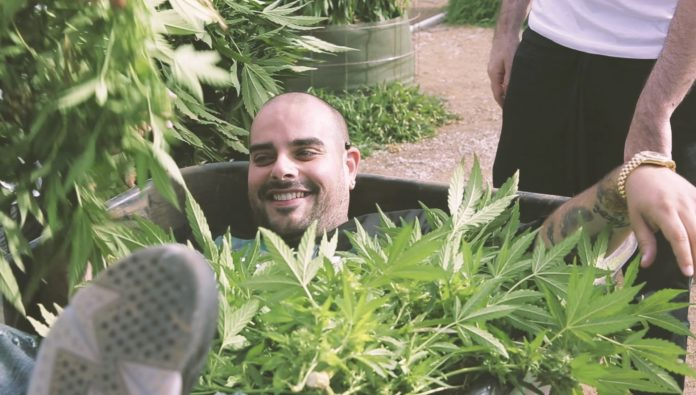 Marijuana Mania, berner, blog, medical marijuana, superindykings